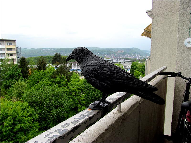 Как избавиться от голубей на крыше ба.